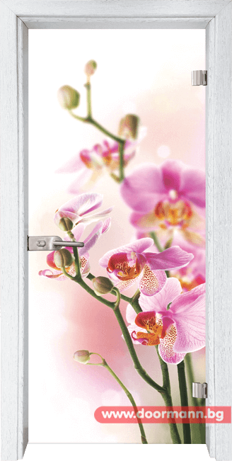 Стъклена врата модел Print 13-2 – Бреза